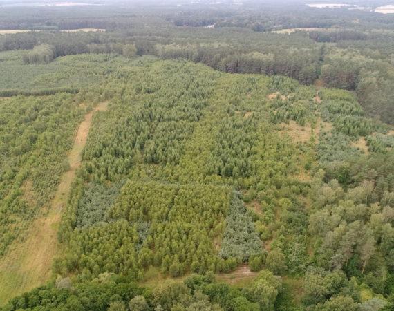 Kontrola lasy